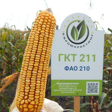 Гібрид кукурудзи ГКТ 211